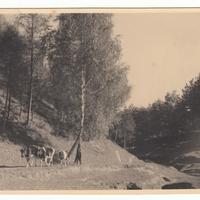 Mf.38.13.jpg